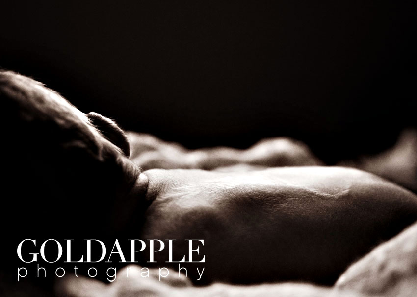 goldapple-photography-0879